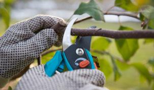 Vypestujte si záhradný altánok