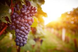 Kvalitné vína