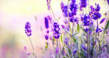 Kvety vo vašom byte? Nemusia byť len v kvetináči