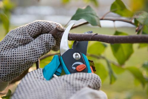 Skúste si vypestovať záhradný altánok
