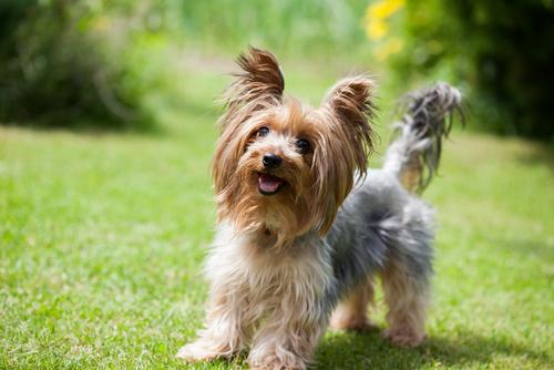 Ako vybrať ideálny pelech pre vášho psíka?