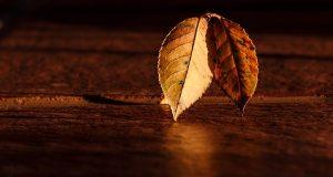 Ideálna lazúra na drevo by mala drevo chrániť, no zároveň ho omladiť