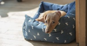 Ako vybrať správne pelechy pre psov?