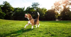 5 maličkostí, ktorými najviac potešíte svojho psa