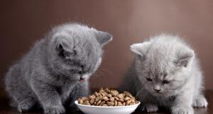 Aká je kvalitná potrava pre vašich domácich miláčikov?